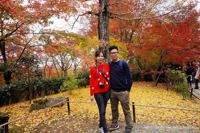 日本楓葉64