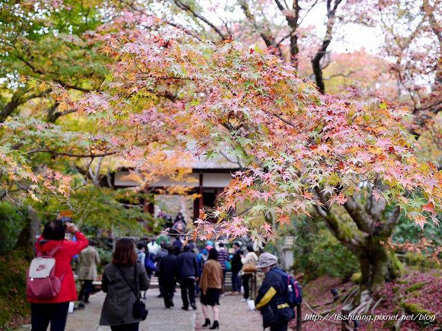 日本楓葉93
