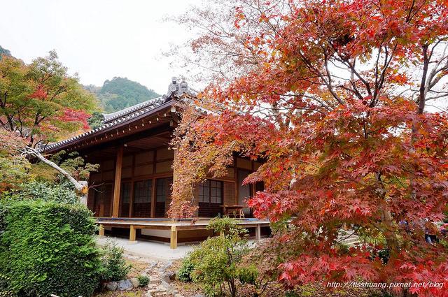 日本楓葉57