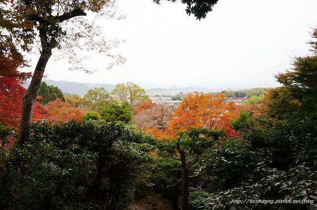 日本楓葉56