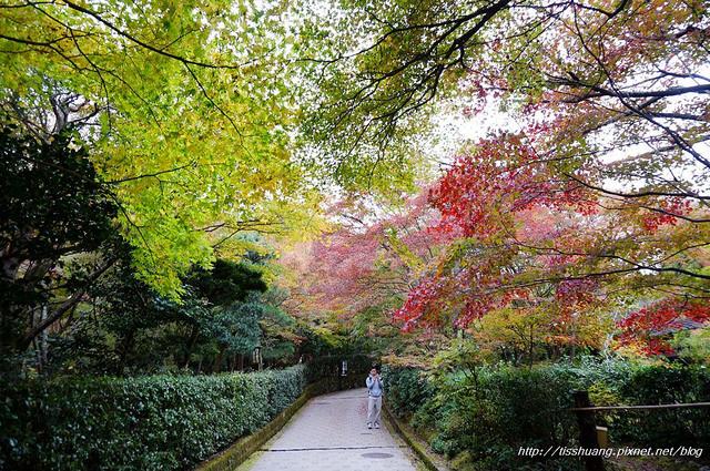日本楓葉72