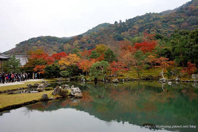 日本楓葉74