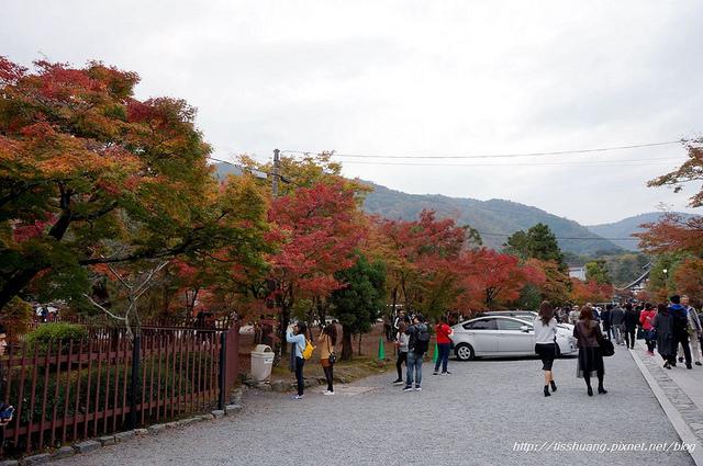 日本楓葉82