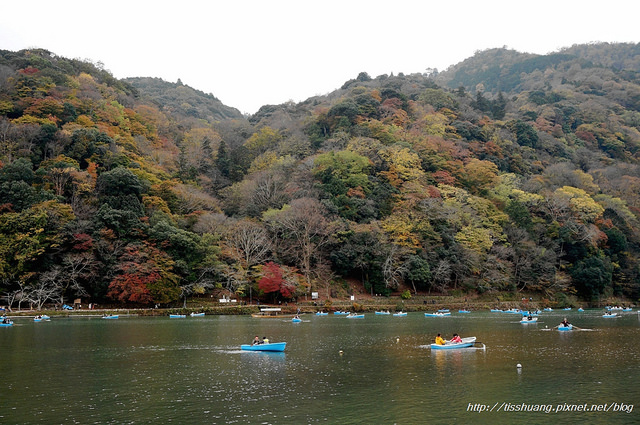 日本楓葉85