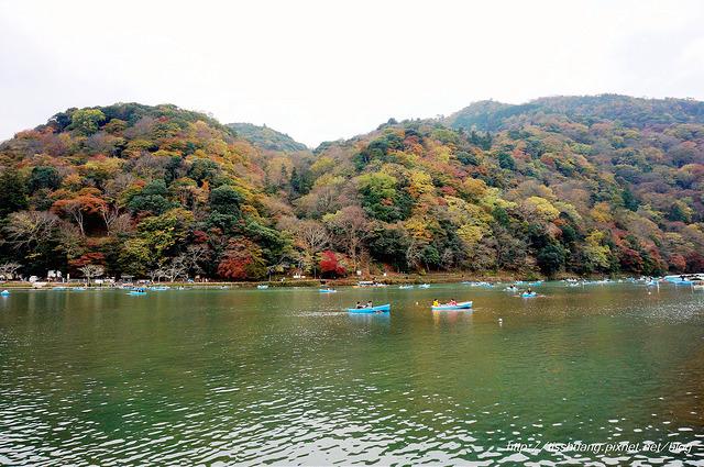 日本楓葉86