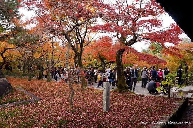 日本楓葉21