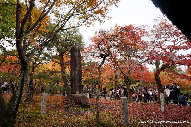 日本楓葉20