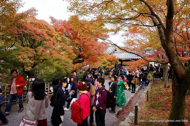 日本楓葉26