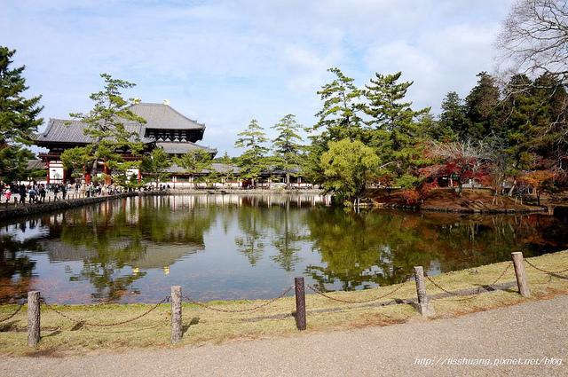 日本楓葉11