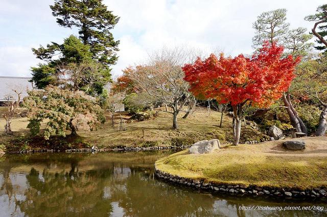 日本楓葉9