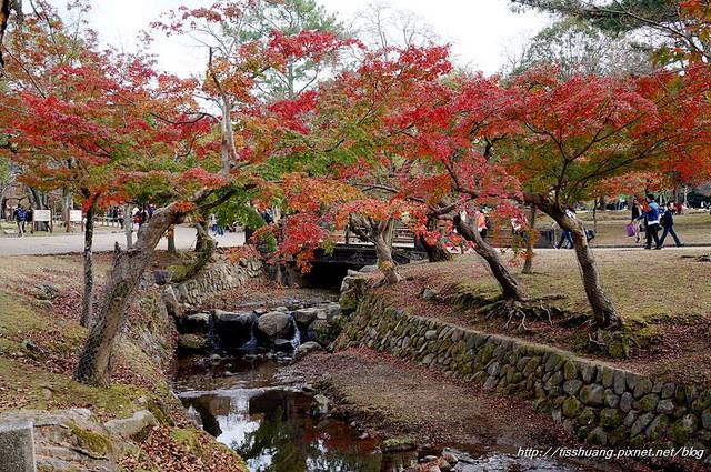 日本楓葉2