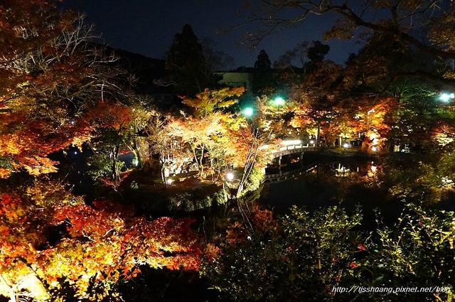 日本楓葉39