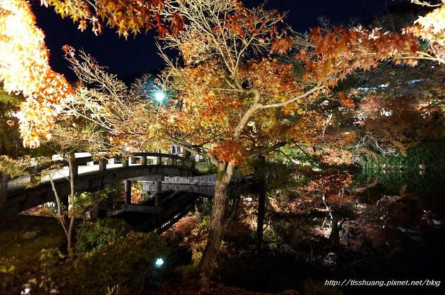 日本楓葉46