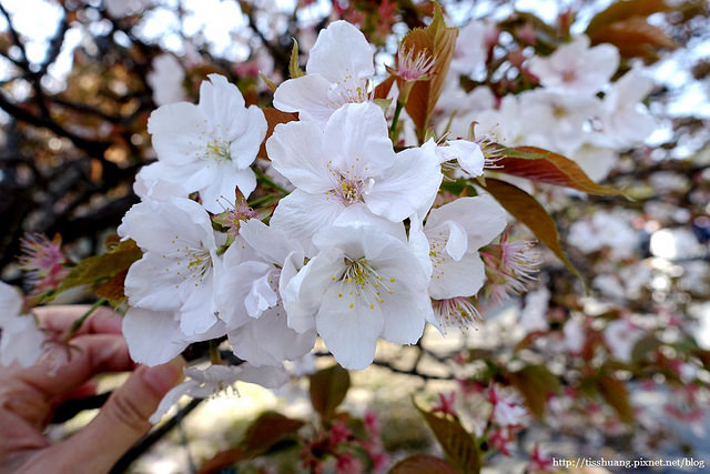 京都第二天242