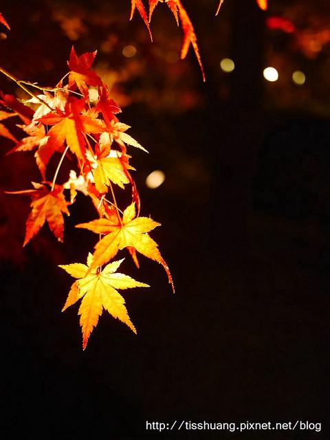 京都第三天213