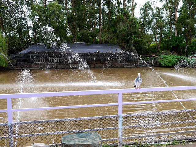 桃園青松農場32