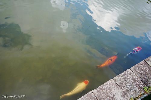 龍潭湖21